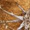 Soulager ses Articulations avec l'Harpagophytum