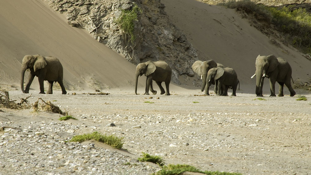 elephants du namib