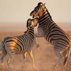 Les plus grandes réserves de la Namibie