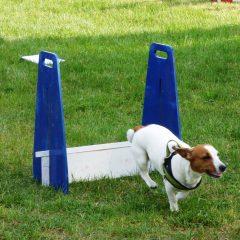 Pratiquer un sport avec son chien