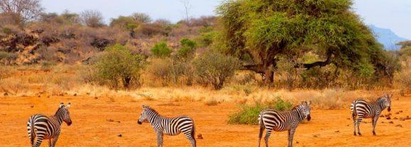 Zoom sur les parcs remarquables du Kenya