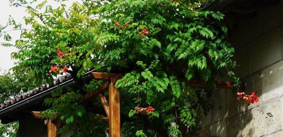Le bon choix d'une plante grimpante