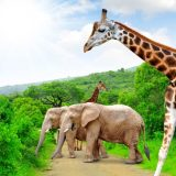 Vivre sereinement les vacances dans le territoire sud-africain
